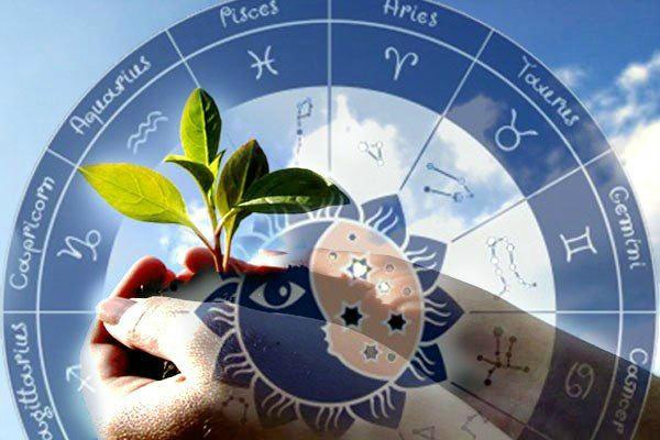 Лунный посевной календарь садовода по дням на февраль 2020 (таблица)