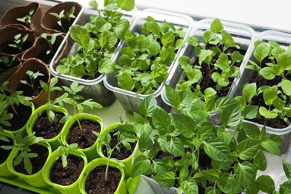 Работы огородников и садоводов в марте