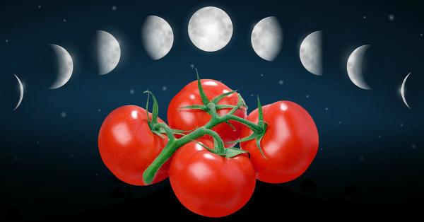 Посадочные дни для томатов в марте 2020 по Лунному календарю