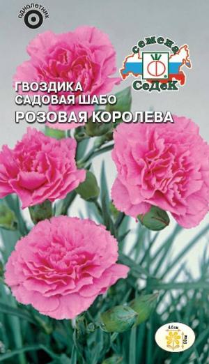 Гвоздика Шабо сорт Розовая королева