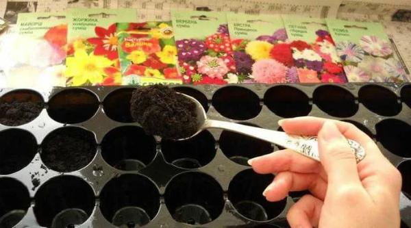 Заботы цветоводов в феврале