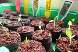 Благоприятные дни для посадки томатов в марте 2020 года на рассаду по Лунному календарю Видео
