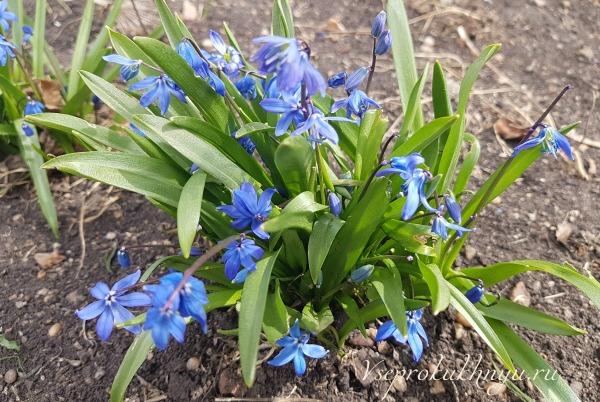 Заботы цветоводов в апреле