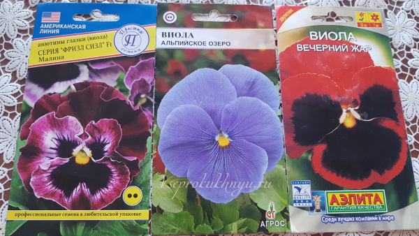Как вырастить виолу из семян в домашних условиях