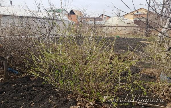 Советы садоводам и огородникам