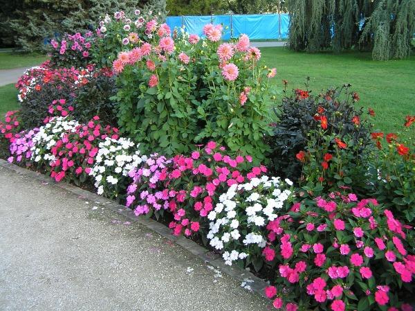С какими цветами сочетают бальзамин на клумбе