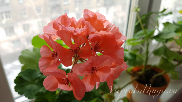 Советы цветоводов