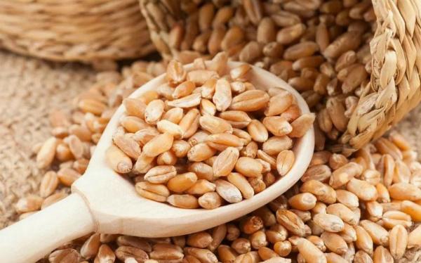 Какую пшеницу выбрать для проращивания