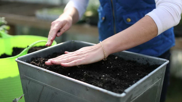 Подготовка почвы и емкости