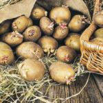 Благоприятные дни для посадки картофеля в 2021 году