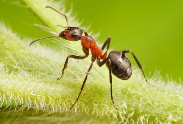 Борьба с муравьями в теплице