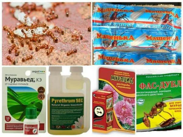 Эффективные препараты от муравьев в теплице