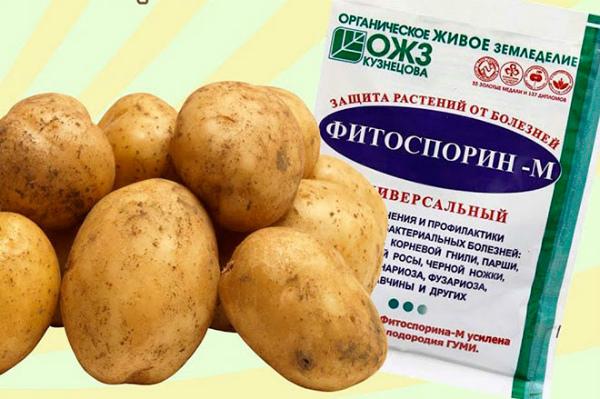 Фитоспорин для картофеля