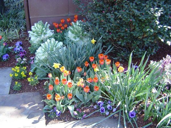 Что посадить рядом с тюльпанами, когда они отцветут