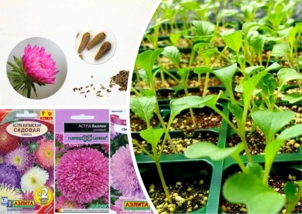 Подготовка семян, посев