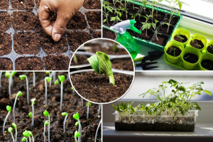 Что сажать в марте на рассаду в 2021 году Какие овощи цветы можно сеять в марте Видео