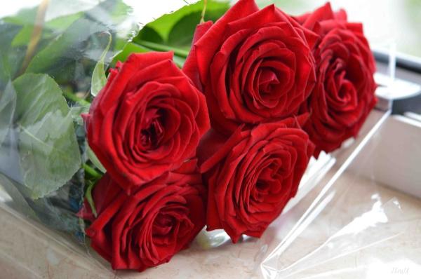 Какие розы подходят для укоренения