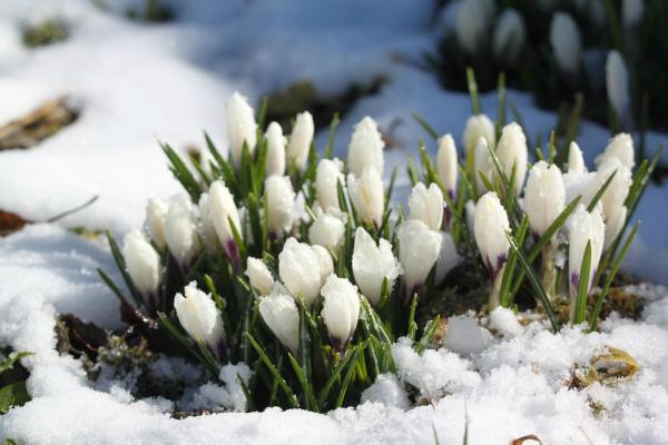 Народные приметы садовода на март