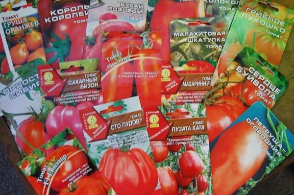 Выбор семян и их подготовка к посеву