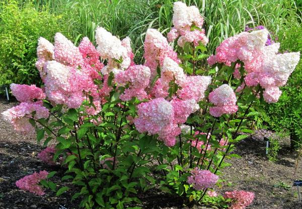 Советы опытных садоводов